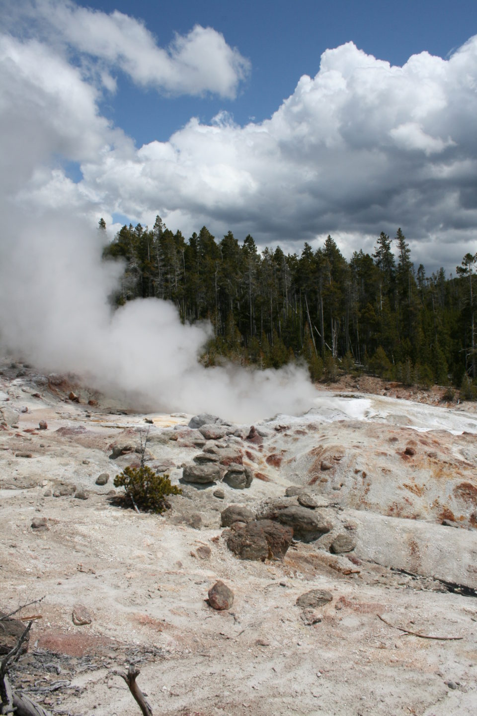 thermal pool, steam, Yellowstone National Park